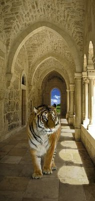 Тигр. Фотообои для дверей. Размер: 97х204 см