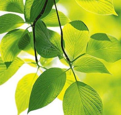 Летнее настроение. Фотообои,  листва. Размер: 204х194 см.