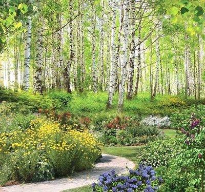 Начало лета. Фотообои лес. Размер: 291х272 см.