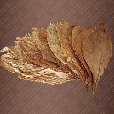 Боливиан Криолло (Bolivian Criollo) лист