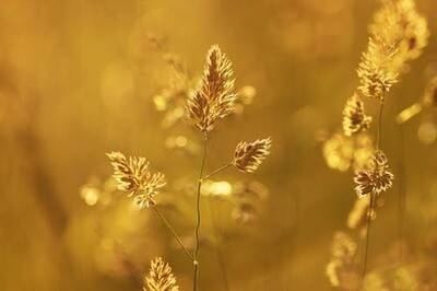 AUDIO - Rasa-Lila Srimad Bhagavatam Canto 10.29