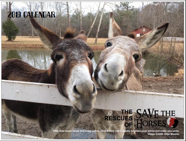 Save the Horses 2019 Rescue Calendar