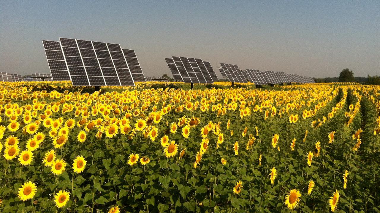 myCleantechSolarTracker™ Solaranalage - Acker mit Sonnenblumen