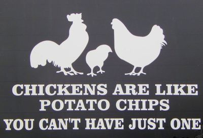 Car Decal - Chickens Are Like Potato Chips You Can't Have Just One