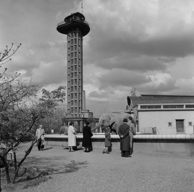 Historisch  Rotterdam, Diergaarde Blijdorp 1954, Jan Roovers