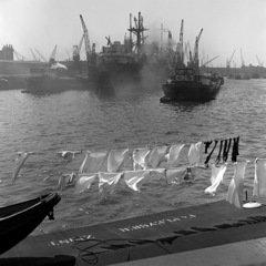 Historisch Rotterdam, Rijnhaven, 1950 Vrije Volk