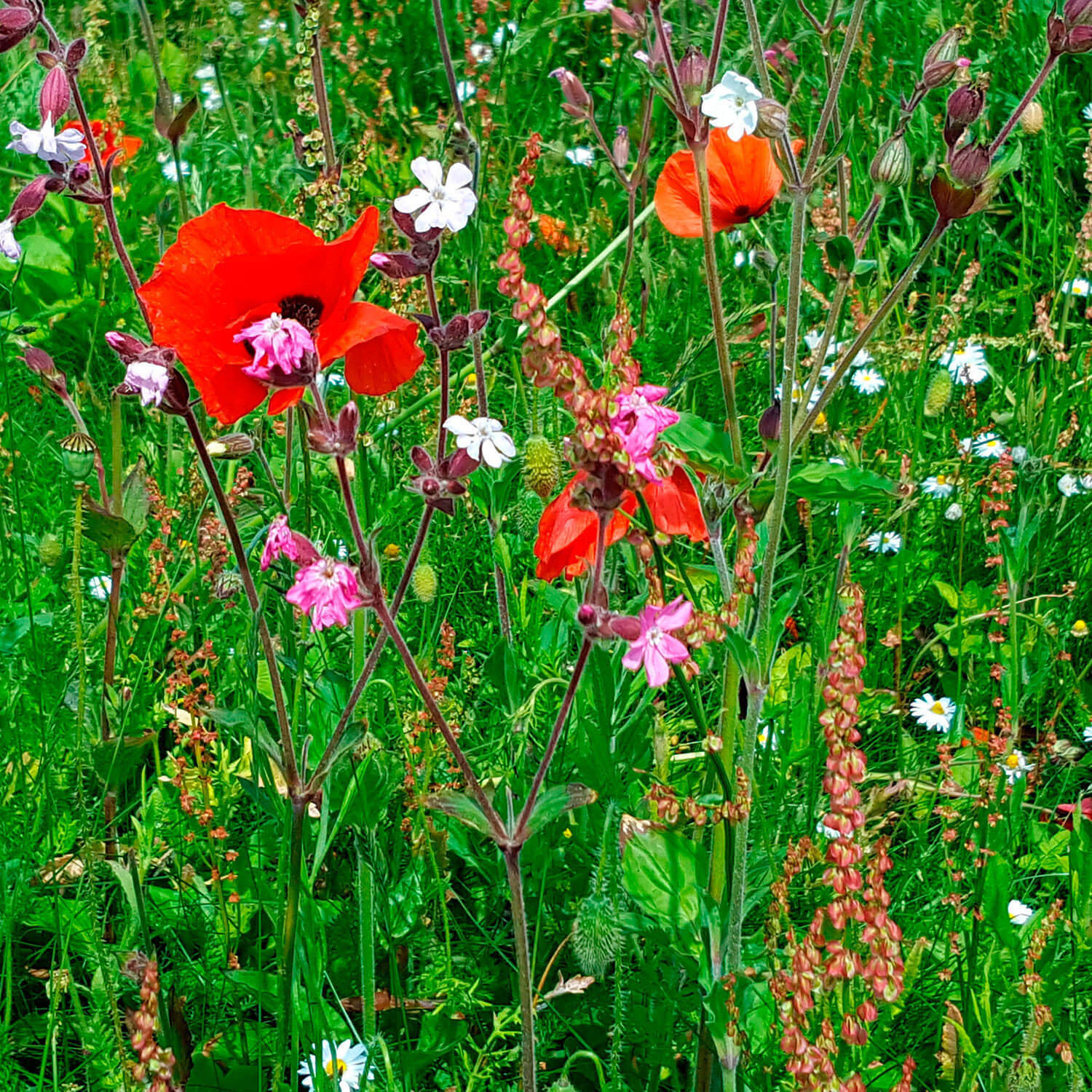 Birds and Bees Meadow Turf (Meadowmat)