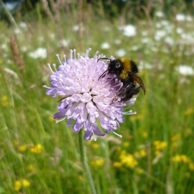 Birds and Bees Meadow Turf (Meadowmat) SH-meadow-Bees