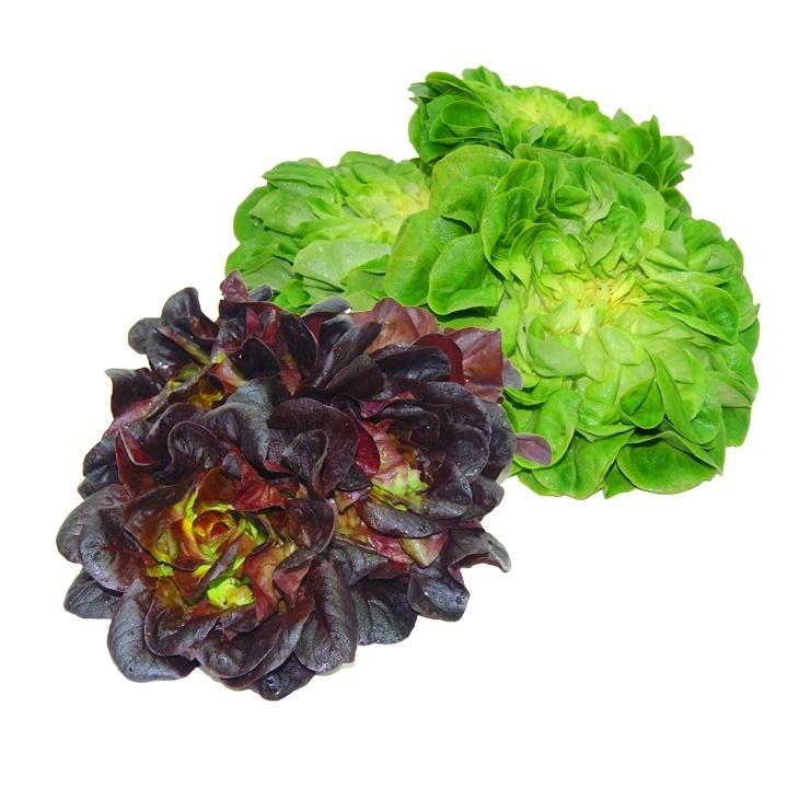 Lechuga - Lettuce - Alface - Salade (h) (1 Cabeza)