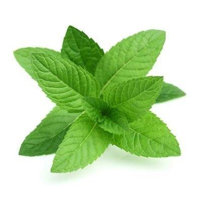 Menta - Mint - Hortelã - Menthe (h) (Envase de 8 oz.)