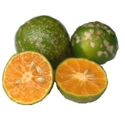 10 Limon Mandarino - Mandarine Lime - Lima Mandarina - Citron Mandarine (o)