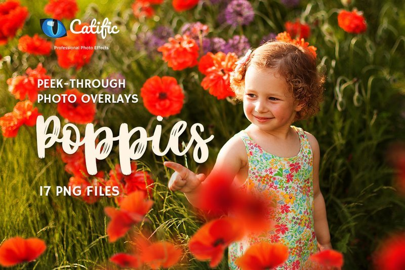 17 Poppie Flowers Photo Overlays