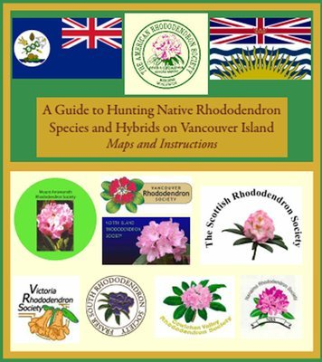A Guide to Hunting Native Rhododendrons