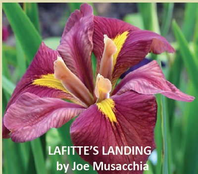 LAFITTE'S LANDING-New Introduction 2019