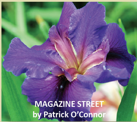 MAGAZINE STREET-New Introduction 2019