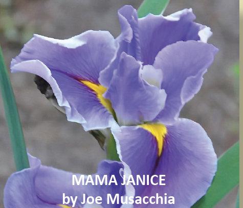 MAMA JANICE--New Introduction-2019