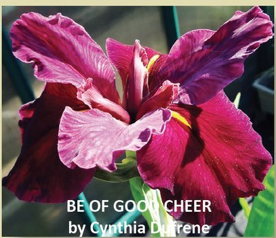 BE OF GOOD CHEER-New Introduction 2019