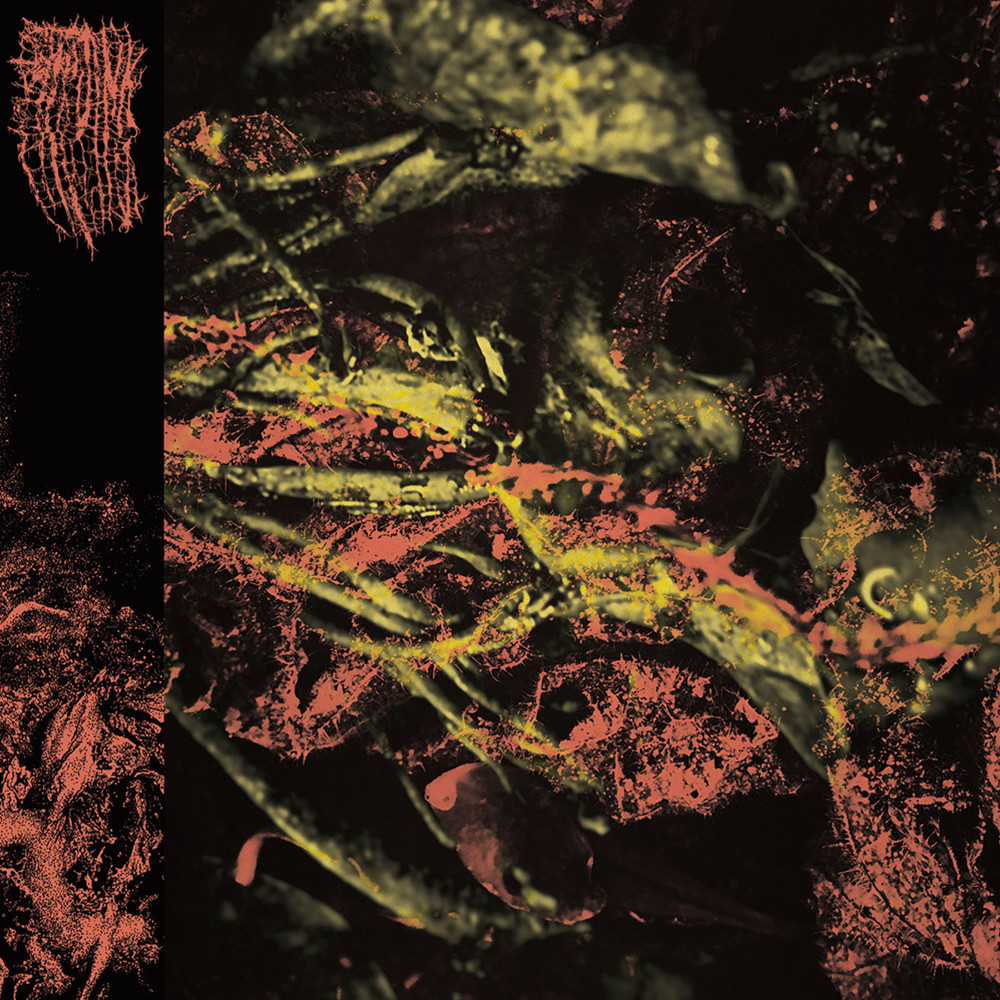 Hissing - Permanent Destitution