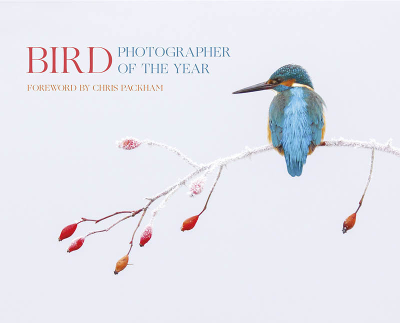 Bird Photographer of the Year collection 2
