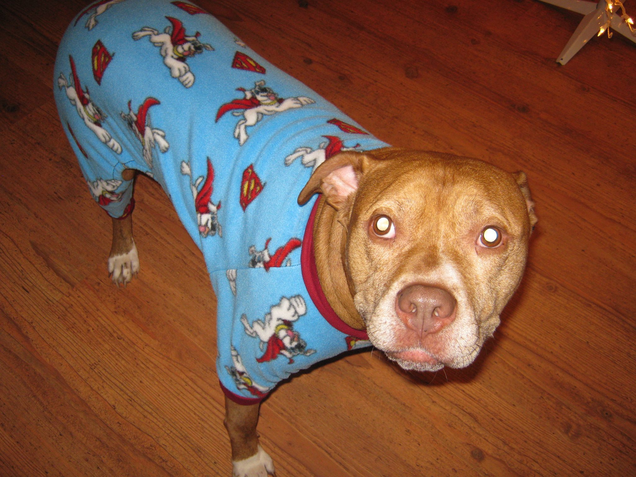 Doggie pajama sewing pattern - small thru xl multi sized pattern