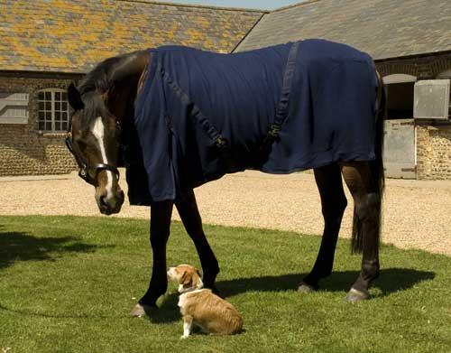 Navy Fleece rug