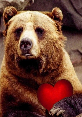 Grizzly Bear Valentine