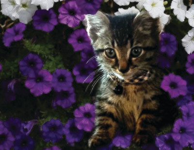 kitten in flowers