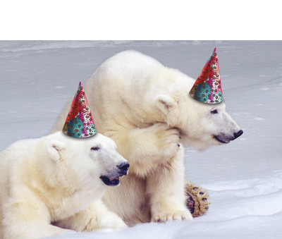 Polar Bears Birthday