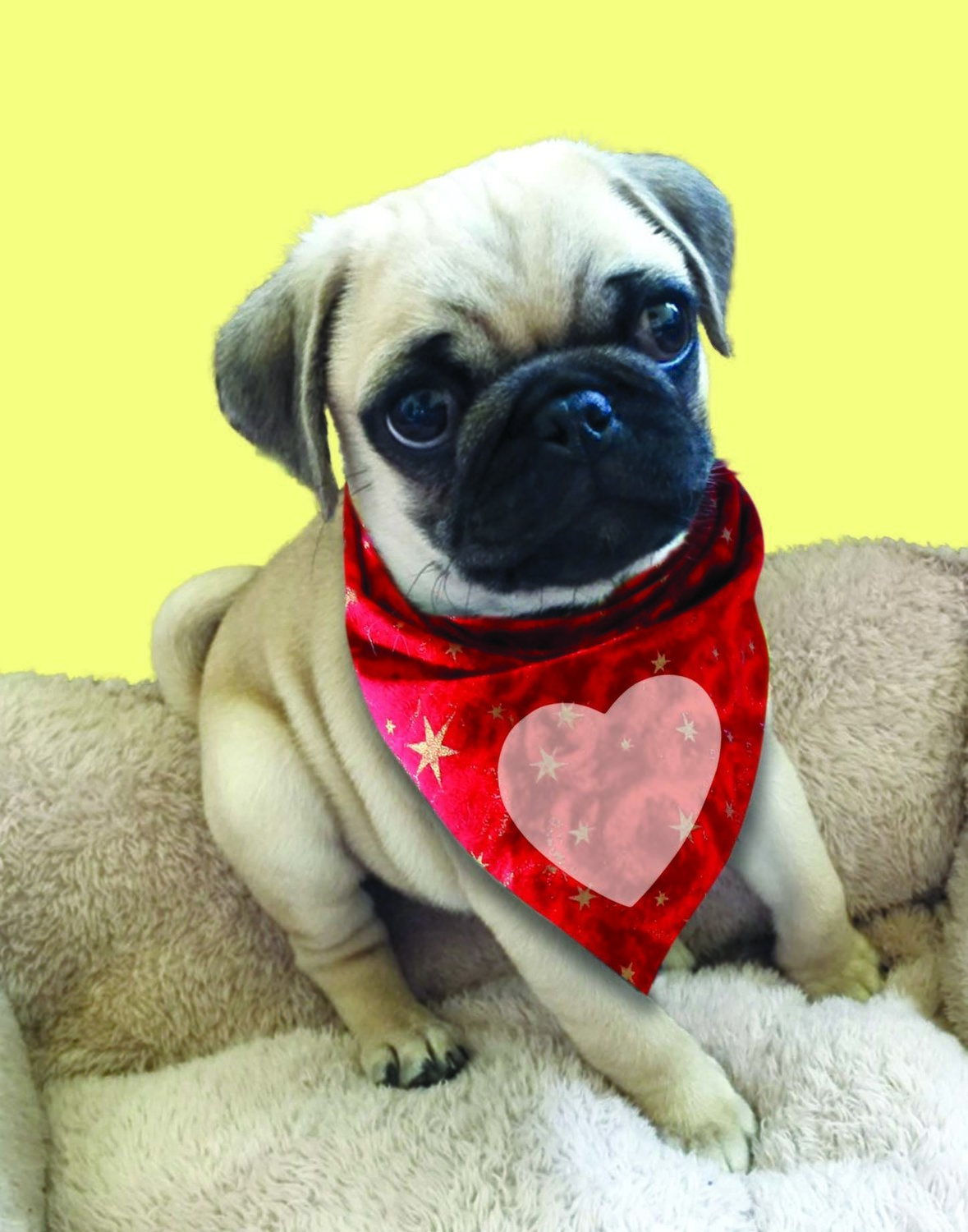 Pug with Heart