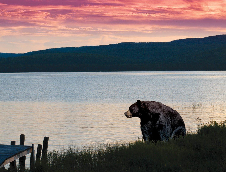 Bear on Shore