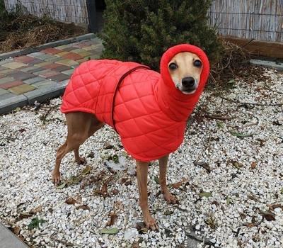 Waterproof WINTER coat (different colors)