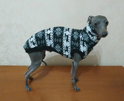 Dog warm t-shirt  (different colors, fur inside)