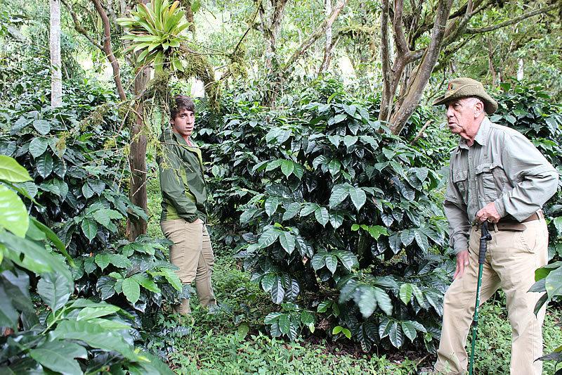 Coffee from Ecuadorian Cloud Forest - Dark Roast Whole Coffee Beans