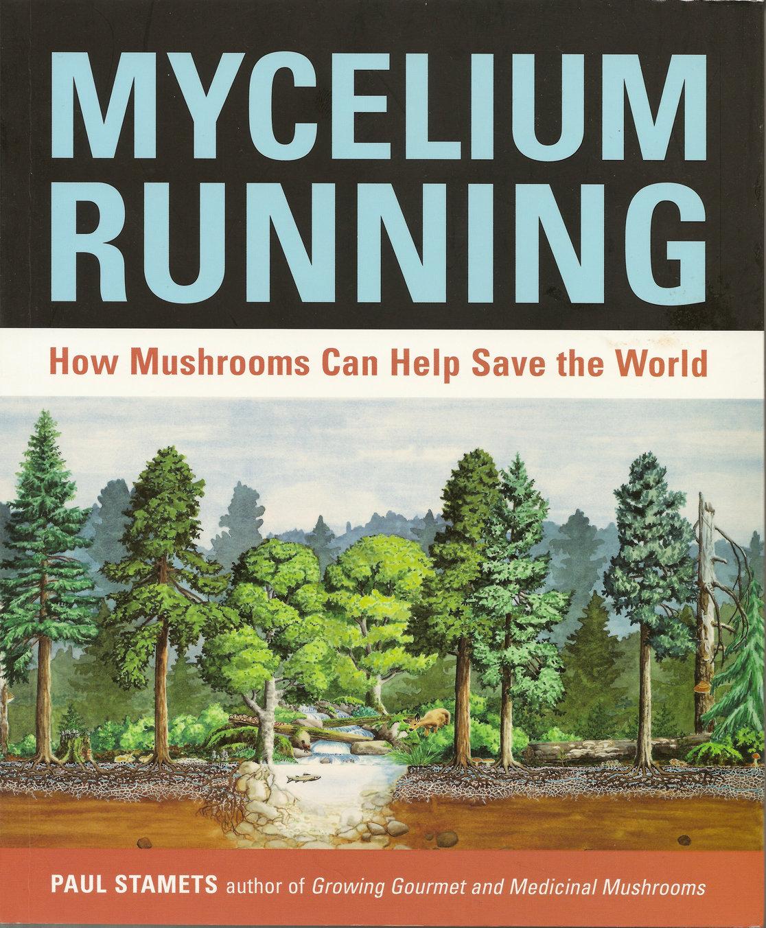 Mycelium Running 00015