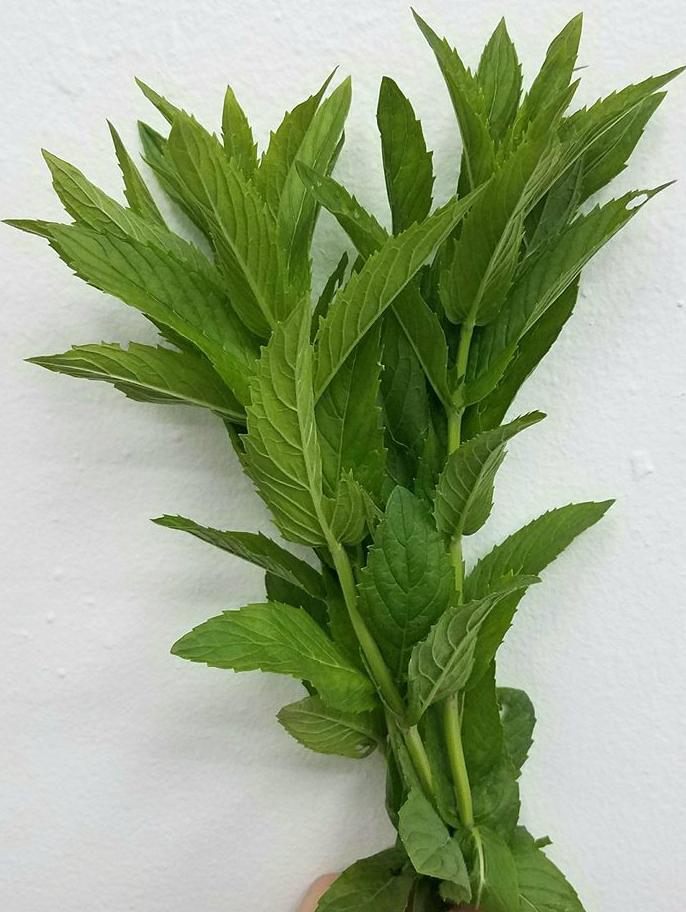 Fines herbes - Bouquet de menthe fraiche marocaine du Québec sans pesticide