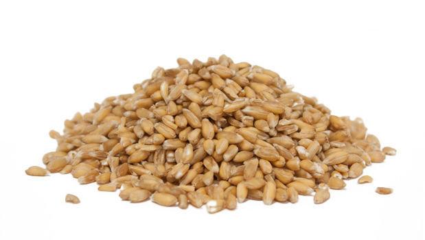 Epeautre en grain biologique 1Kg Vrac