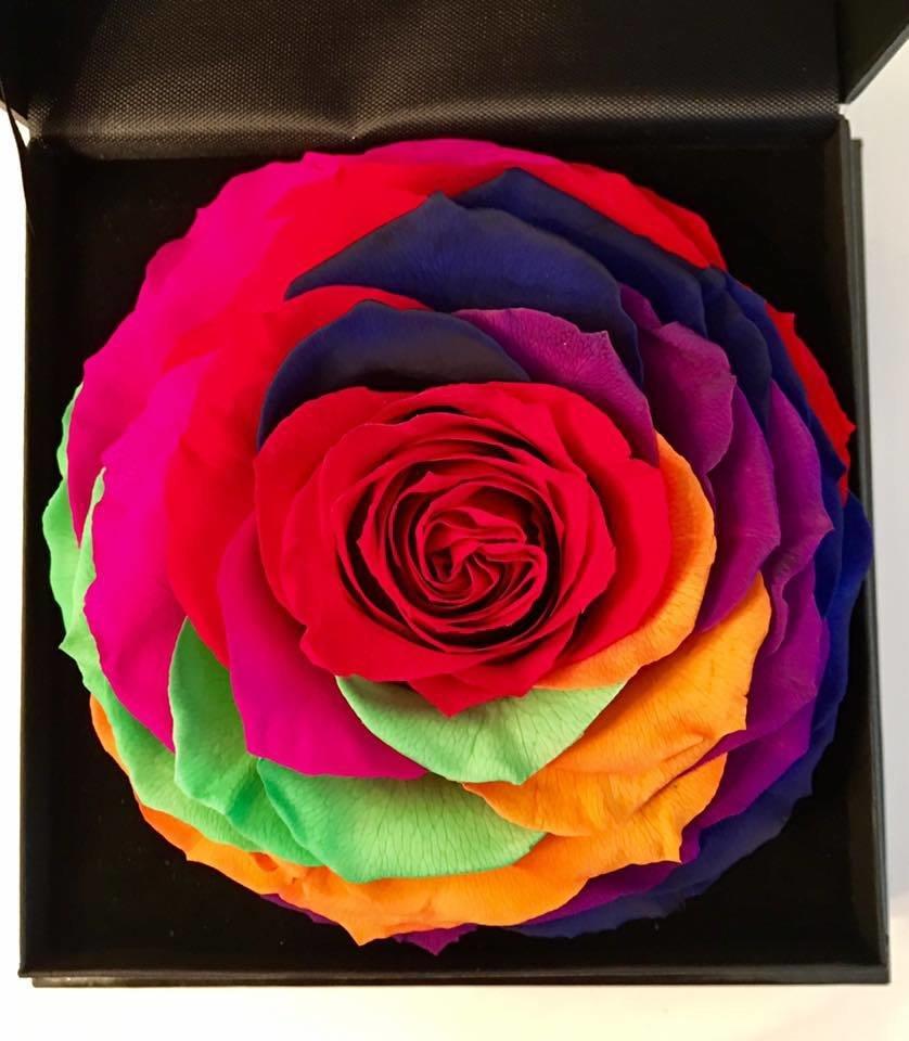 Jumbo box multicolor