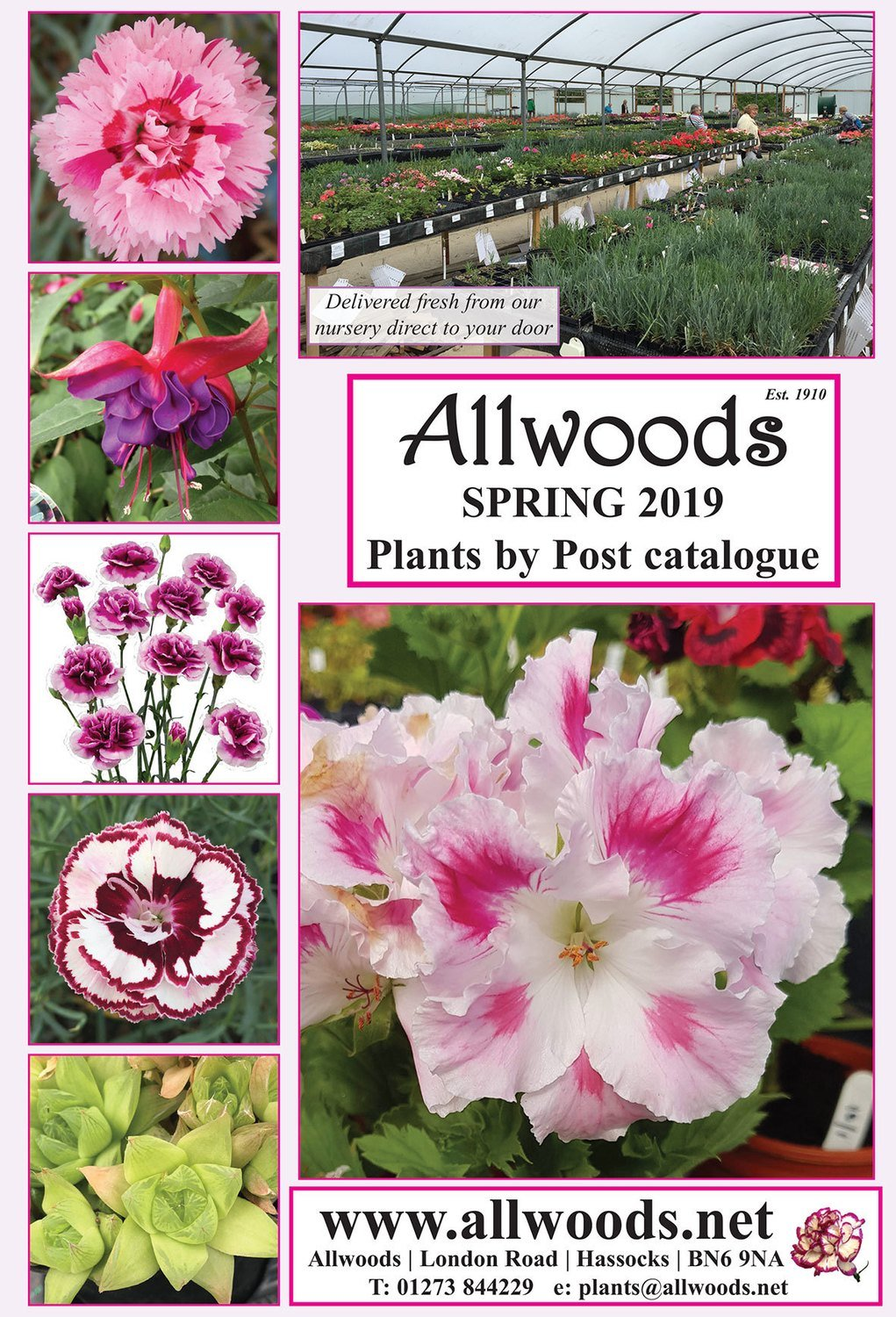 Allwoods Latest Spring Mail Order Plant Catalogue