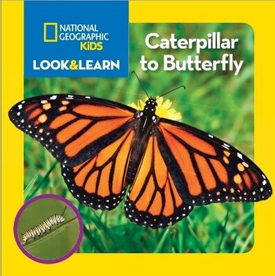 Book - National Geographic Kids - Butterflies, Bugs or Frogs