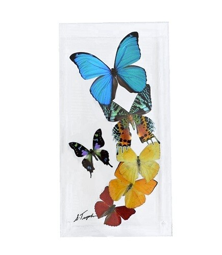"10 - 6"" X 12"" Butterfly Display Flight Mount"