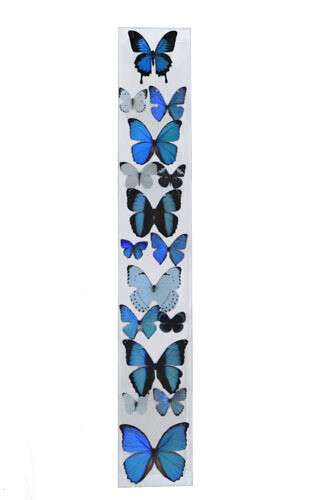 """19 - 6"""" X 36"""" Butterfly Display Museum Mount"""
