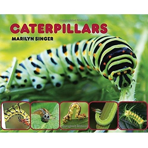 Book - Caterpillars