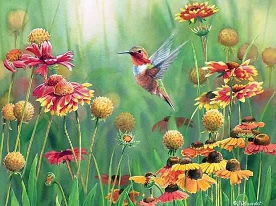 Puzzle - Rufous Hummingbird