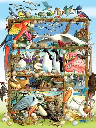 Puzzle - Birds of the World