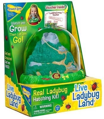 Live Ladybug Land