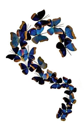 Copper Art - Blue Morpho S