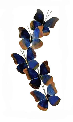 Copper Art - Blue Morpho Set of 5