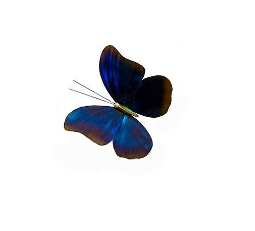 Copper Art - Blue Morpho Single