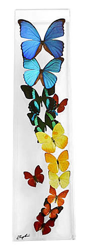 "18 - 6"" X 24"" Butterfly Display Flight"