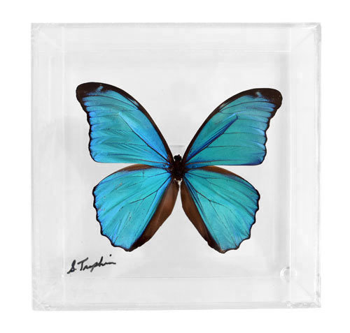 "03 - 6"" X 6"" Square or Diamond Butterfly Display With Large Butterfly"